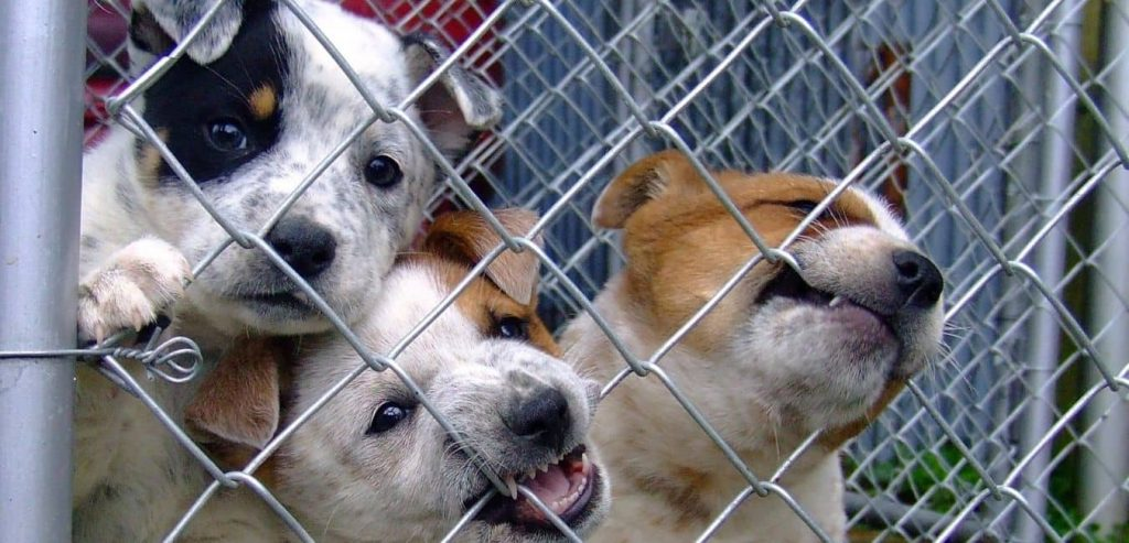 dogs biting the fence